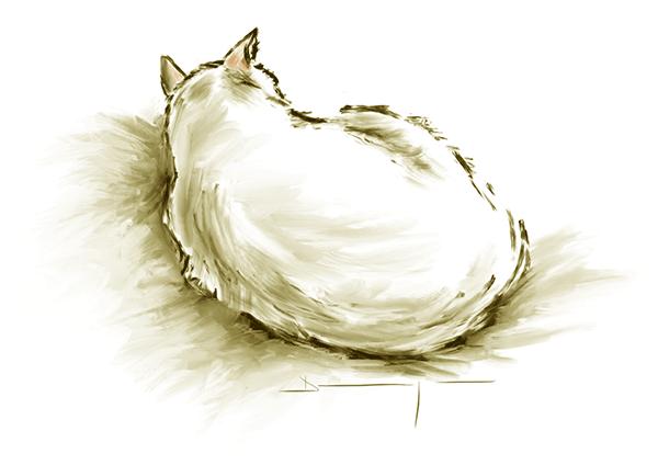 mon-chat-yoda