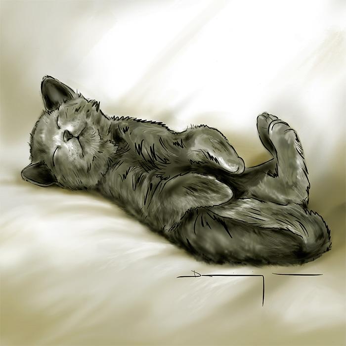 chaton-endormi-pattes-en-lair