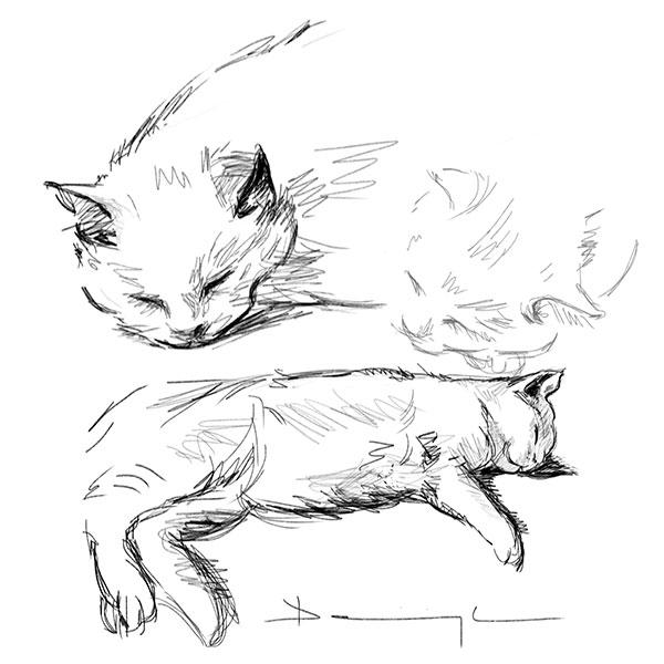 étude de chat, dessin numérique
